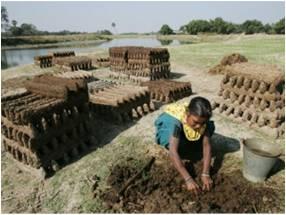 Séchage des galettes de bouse Inde